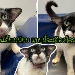 'แมวจรหน้าแปลก' ได้รับการช่วยเหลือ กลายเป็นขวัญใจชาวเน็ต จนมีแต่คนแย่งรับเลี้ยง