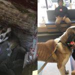 สุนัขถูกขโมยและหายไปนานนับเดือน ถูกพบในบ้านร้าง และได้กลับสู่อ้อมกอดเจ้าของอีกครั้ง