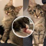 """""""ลูกแมว"""" ถูกพบลำพัง ได้รู้จักกับเพื่อนใหม่ขนปุย มันจึงตามกอดและไม่ปล่อยให้คลาดสายตา"""
