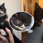 ลูกแมวถูกพบลำพังในสภาพย่ำแย่ ได้รับการช่วยเหลือ จนเปลี่ยนไปราวกับคนละตัว