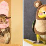 เชิญชม 20 ภาพสัตว์ ที่มาพร้อมกับชุดแฟชั่นรับหน้าหนาว น่ารักแบบไม่มีใครยอมใคร