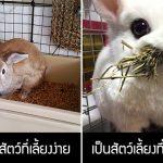 มาดูความจริง 5 อย่างเกี่ยวกับเจ้ากระต่ายหูยาว ที่คนทั่วไปมักจะเข้าใจกันผิดๆ