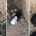 แม่หมาเห่าเรียกคน แล้วนำทางพวกเขามา เพื่อให้ช่วยลูกของมันที่กำลังลำบาก