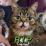 แมวลิ้นห้อย Lil Bub เซเลบอินตาแกรม จากไปอยู่บนสวรรค์แมวอย่างสงบแล้ว