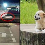 พลิกล็อก หมารอเจ้าของที่เป็นกระแส จริงๆ แล้วไม่ได้ถูกทิ้ง แต่เป็นหมาจรอยู่แล้ว!?