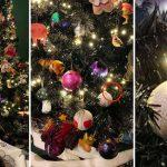 เจ้าแมวใช้ต้นคริสต์มาสเป็นที่ซ่อนตัว ซ่อนเนียนมากๆ จนทาสเกือบหาไม่เจอ