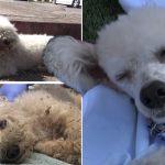 สุนัขบาดเจ็บสาหัสนอนอยู่ข้างถนนนานถึง 24 ชั่วโมง โดยไม่มีใครเหลียวแลมันเลย