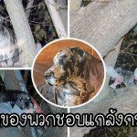กู้ภัยแห่มาช่วย 'เกรทเดนยักษ์' หนัก 54 กิโล ที่ติดบนต้นไม้สูง 6 เมตร คาดไล่จับกระรอก…