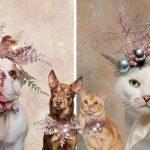 'ช่างภาพ' ทำมงกุฎและปลอกคอสุดอลังการให้ 'สัตว์เลี้ยง' เพื่อถ่ายรูปสวยๆ ฉลองคริสต์มาส