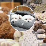 มัดรวม 20 ภาพโคตรน่ารัก ของเหล่าตูบในอนุบาลหมา ตอนพวกมันนอนกลางวัน