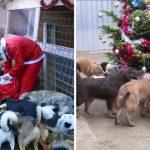 """""""ซานตาใจดี"""" หอบขนมและของเล่น มาให้สุนัขที่ศูนย์พักพิงในช่วงคริสต์มาสของทุกปี"""