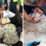 สุนัขบริการคลอดลูกในสนามบิน ระหว่างรอขึ้นเครื่อง ผู้โดยสารนับพันจึงมาล้อมให้กำลังใจ