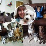 ชาวเน็ตทึ่ง!! เมื่อหญิงสาวสามารถจับหมา-แมว รวม 17 ตัว นั่งถ่ายรูปในเฟรมเดียวกันได้