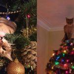 """20 ภาพ """"แมวเหมียวจอมยุ่ง"""" ที่อยู่นิ่งไม่ได้ เมื่อเห็น """"ต้นคริสต์มาส"""" ระยิบระยับตั้งอยู่ในบ้าน"""