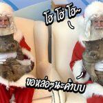วอมแบทแสนน่ารัก ขอนั่งตักคุณลุงซานต้า เพื่อฉลองวันคริสต์มาสกับเขาบ้าง