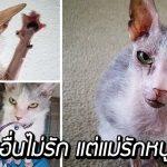 แมวที่คนพากันบอกว่าน่าเกลียด เจอหญิงที่ยอมรับตัวมัน รับมันมาเป็นครอบครัว