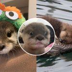เชิญชม 20 ภาพของลูกนากตัวน้อย สัตว์ขี้อ้อนแห่งท้องทะเลที่คนพากันตกหลุมรัก