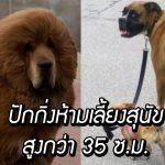 ปักกิ่งสั่งแบนหมาฟ้าแลบ ห้ามเลี้ยงหมาสูงกว่า 35 ซ.ม. ให้เวลาเตรียมตัวแค่ 3 วัน!!