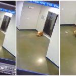 ชายช่วยชีวิตหมาได้หวุดหวิด ก่อนมันจะถูกลิฟท์หนีบ เพราะเจ้าของลืมมันไว้ข้างนอก
