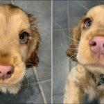 น้องหมามัดใจชาวเน็ตอยู่หมัด ด้วยดวงตาใสวิ้งๆ ที่ดูเหมือนตัวการ์ตูนหลุดมานอกจอ