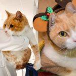 คู่หูแมวอ้วนรักกันมาก ไม่อยากแยกกัน อาสาฯ เลยต้องช่วยหาบ้านให้มันแบบแพ็กคู่