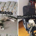 22 เหมียวจอมแสบ ประกาศให้โลกรู้ว่าแมวนี่แหละ คือเจ้าของบ้านที่แท้จริง ไม่ใช่มนุษย์!!