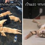 19 ภาพสัตว์เลี้ยงชวนง่วง ด้วยท่านอนสุดคิ้วท์ หลับเป็นตาย ปลุกยังไงก็คงไม่ตื่น