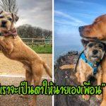 'สุนัขตาบอด' อุ่นใจ เมื่อมีพี่ตูบคอยนำทางให้และเป็นเพื่อนเพียงตัวเดียวที่อยู่เคียงข้างเสมอ