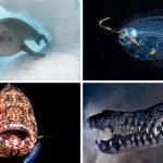 ชมสุดยอดภาพสัตว์สวยงามแห่งมหาสมุทรที่ได้รับรางวัลจาก Ocean Art Contest 2019