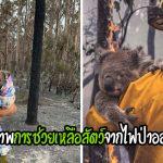 รวมภาพสัตว์ที่รอดจากไฟป่าในออสเตรเลีย สร้างความตระหนักเกี่ยวกับภัยพิบัติที่เกิดขึ้น