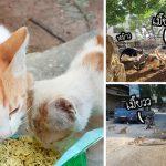 มาดูบรรยากาศของเมือง Kafr Nabl เมืองซึ่งมีแมวอาศัยอยู่มากกว่าคนกว่า 10 เท่า