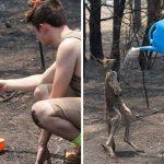 ลูกจิงโจ้มีแผลไหม้ทั่วตัวจากไฟป่า วิ่งเข้ามาหาคนเพื่อขอให้เขาช่วย