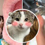 ลูกแมวพิเศษนิสัยขี้อาย เจอคนใจดีเก็บมาดูแล แล้วได้เจอครอบครัวที่มันใฝ่ฝัน