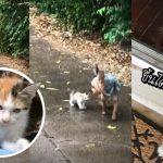 หญิงแปลกใจมาก ปล่อยหมาออกไปฉี่นอกบ้านแป๊บเดียว กลับมามีลูกแมวมาด้วย!?