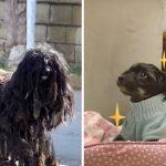 หมาขนยุ่งไม่ยอมให้ใครจับมันเลย 2 ปี ได้คนช่วยพามาตัดขน และพาไปอยู่บ้านด้วย