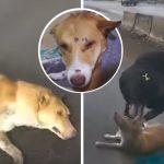 ผู้คนพากันขับรถผ่านหมาที่ถูกรถชนไป มีเพียงหญิงคนหนึ่งที่หยุดช่วยชีวิตมัน