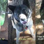 หญิงเจอหมาที่ถูกล่ามไว้ทั้งวันทั้งคืน ช่วยดูแลมันนานนับปี กว่าจะได้พาไปอยู่บ้านด้วย