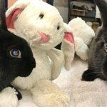 คนใจดีพบกระต่ายตาบอด ถูกทิ้งไว้พร้อมตุ๊กตาตัวโปรด ช่วยมันทันก่อนหนาวตาย