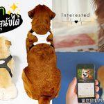 บริษัทจากญี่ปุุ่น ผลิตเสื้อกั๊กหมาอัจฉริยะ ช่วยบอกอารมณ์ของสุนัขให้คุณรู้ได้
