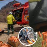 แครอทพันๆ กิโลถูกโปรยลงจากท้องฟ้า เพื่อช่วยให้สัตว์ที่ประสบภัยไฟป่ามีอาหารกิน