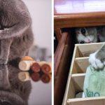 18 สิ่งที่ชาวเน็ตคิดว่าแมวจะพกติดตัว ถ้าหากว่าพวกมันมีกระเป๋าหน้าใส่ของ