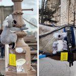 ตุ๊กตาโคอาล่าถูกนำไปติดไว้รอบเมืองนิวยอร์ก เพื่อกระตุ้นให้คนช่วยบริจาคเงินช่วยพวกมัน