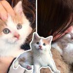 ลูกแมวถูกช่วยจากพุ่มไม้หลังบ้าน ได้พบกับครอบครัวแสนดี  ชีวิตมันจึงเปลี่ยนไปตลอดกาล