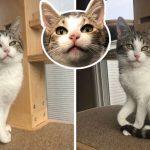 """""""ลูกแมวอุ้งเท้าคดงอ"""" มีความสุขมากและพูดไม่ยอมหยุด หลังได้รับการช่วยเหลือ"""