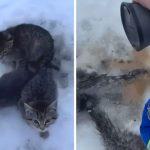 """หนุ่มใช้กาแฟร้อนเทละลายน้ำแข็งที่ทำให้หาง """"ลูกแมว"""" ติดกับพื้นเป็นเวลาหลายชั่วโมง"""