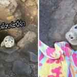 """""""ลูกแมวน้ำ"""" ติดอยู่ในซอกหิน ทำตาแบ๊วรอความช่วยเหลือ ในที่สุดก็มีคนเข้ามาช่วย"""