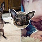 หญิงสาวร้องไห้เมื่อเห็นสภาพ 'สุนัขจรจัดพิการ' เธอจึงอุทิศชีวิตเพื่อมอบสิ่งที่ดีที่สุดให้มัน