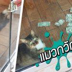 เหมียวประจำออฟฟิศทำหน้าที่จับหนูก็ได้ ช่วยคนหาเงินก็ดี นี่สิแมวกวักของจริง!!