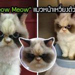 """Meow Meow"" แมวหน้าเหวี่ยงตัวใหม่ แม้จะดูโหด แต่ก็อัดไปแน่นด้วยเสน่ห์ชวนหลงรัก"