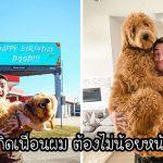 หนุ่มลงทุน 'เช่าป้ายโฆษณา' ในวันเกิดของสุนัขแสนรัก เพื่อให้ทุกคนในเมืองร่วมยินดีกับมัน